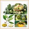 garcinia cambogia dried extract/garcinia cambogia fruit extract powder/garcinia cambogia powder extract