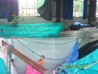 Tilapia fingerling net cage/ PE knotless fishing net cage fingerling