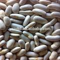 2014 nouvelle récolte de haricots blancs