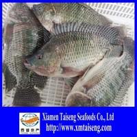 Tilapia Fish China Farm Raised Frozen Tilapia