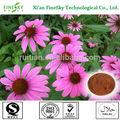 natural en polvo extracto de echinacea purpurea hierba