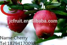 Fresh Huaniu Apple Plantation in Tianshui
