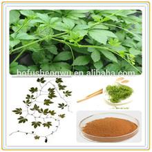 high quality gynostemma pentaphyllum extract/gynostemma gypenosides/fiveleaf gynostemma herb