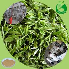Green tea herbal powder polyphenols organic green tea extract