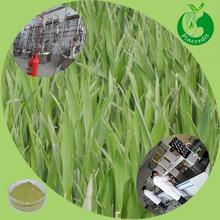 Green wheat grass juice powder wheat grass juicer