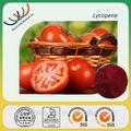 Gmp fonte da fábrica extratosvegetais 100% puro e natural de antioxident licopeno de tomate