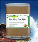 Bio organic fertilizer Bacillus sublilis 300 billion cfu/g DP