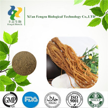 Popular sale angelica sinensis powder