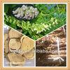 hotest Bitter Sophora Root Extract Powder Matrine and Oxymatrine bulk price