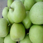2014 crop Green Royal Gala Apple good quality 138#150#163#175#198#