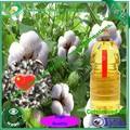rbd olio di semi di cotone