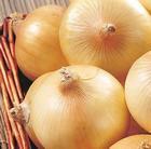 Fresh Yellow Onion in Bulk
