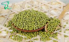 Hot Sale 2014 New Crop China Green Mung Bean