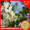 Popular price Sophora Japonica extract powder with 10%-98% rutin