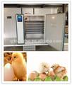 Alta qualidade e diferentes tipos de ovos para incubação máquina/incubadora de ovos de galinha do réptil de aves emu