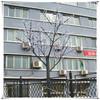 Street/park/garden led garden decorative tree light