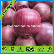 Fresh Onion Red Onion Good Taste For Hot Sale