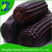 Negro púrpura híbrido de maíz de maíz semillas para plantación