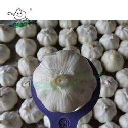 New crop fresh garlic/Wholesale white garlic China origin/China garlic price