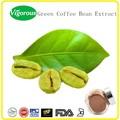100% 자연 녹색 커피 콩 추출물, 녹색 커피 추출물 50%. 녹색 커피 콩 도매