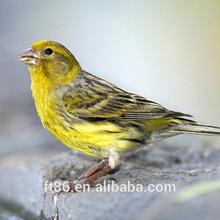 realistic artificial furry wholesale plush lancashire canary birds for sale