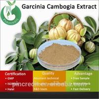 Garcinia Cambogia Extract 80% Hydroxycitric Acid/Garcinia Cambogia Extract Manufacturers/Garcinia Cambogia Extract