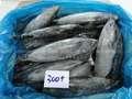 أفضل سعر التصدير 300+ الأسماك المجمدة البينيت