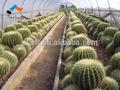 cactuse