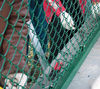 pvc chain link wire mesh,chain link fence / mesh, pvc coated chain link fence ,