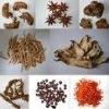 Gossypium herbaceum root extract