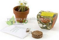 Gallipot flower,can flower,mini garden plant