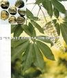 Horse Chestnut extract with 20% Aescin UV ,