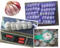 Chinese Fresh Normal White & Pure White Garlic