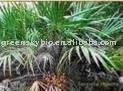 Saw palmetto Extract fatty acid 25% or 45%