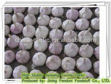 Fresh White Garlic Low Price