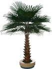 Cheap and High Quality Artificial Washington's Palm Tree+