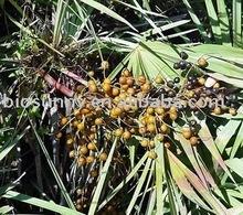 Saw palmetto fruit extract,Fatty acid 25-45%