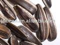 Alta qualidade de sementes de girassol listrado( colheita nova)
