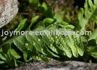 Polypodium Leucotomos Rhizome Extract Triterpenes 10%