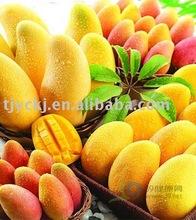 Mango Flavor (HongMei)