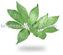 Notoginseng Leaf Triterpenes