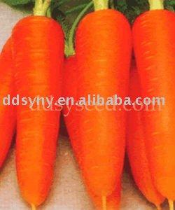 Zanahoria semillas, Semillas de plantas hortícolas, Híbrido
