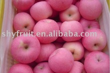 Supply chinese delicious top fuji apple(hot)!