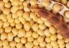 Soybean Oligosaccharide