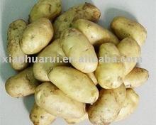 potato extract/Solanum tuberosum/tu dou