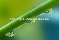 bamboo leaf flavonoids
