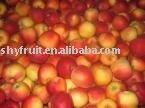 Shaanxi sweet fresh organic red gala apples