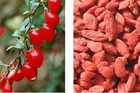 Chinese Organic fresh bulk dried goji berries