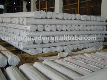 Tonkin Bamboo Stake - Bamboo cane