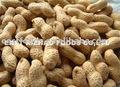 Shandong d'arachide.( 2013 nouvelle récolte)